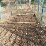 Freshly tilled plot