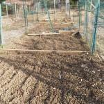 Freshly tilled plot